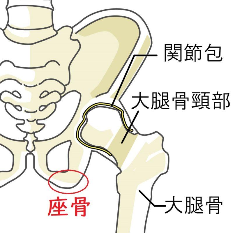 骨盤拡大図