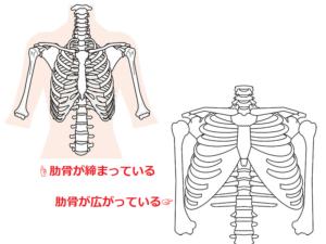 肋骨の正しい&間違い位置のイラスト