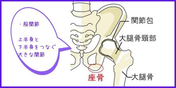 上半身と下半身をつなぐ股関節