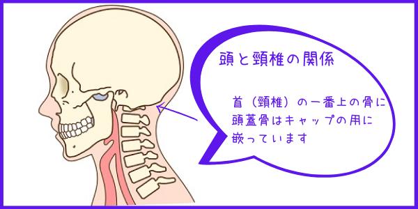 頭は首の一番上の骨に嵌っている