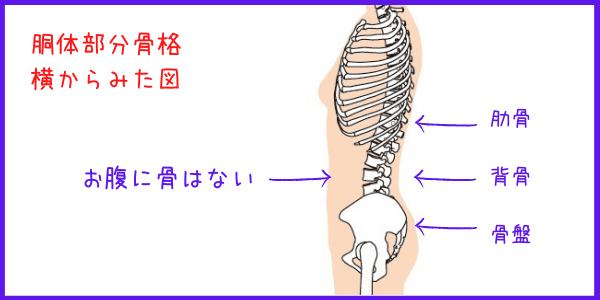 骨位置説明